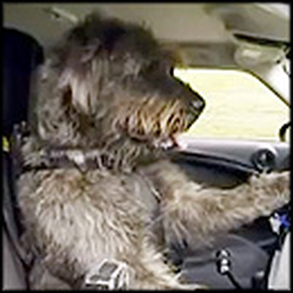 Trained Dogs Do Something Absolutely Amazing - Drive