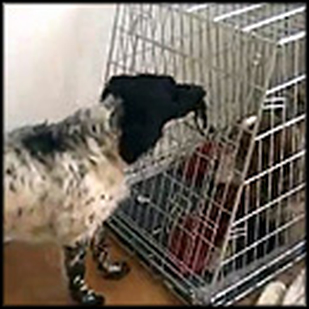 Dog Helps His Caged Friend Escape