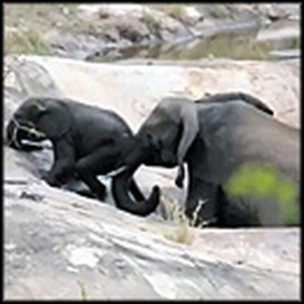 Incredible Footage of Mother Elephant Saving Her Baby From Death