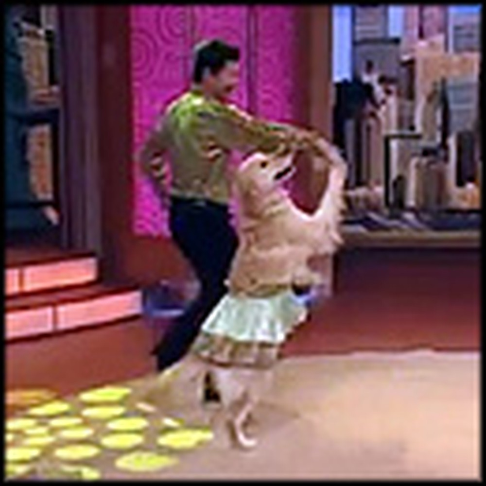 The Incredibly Talented Dancing Merengue Dog