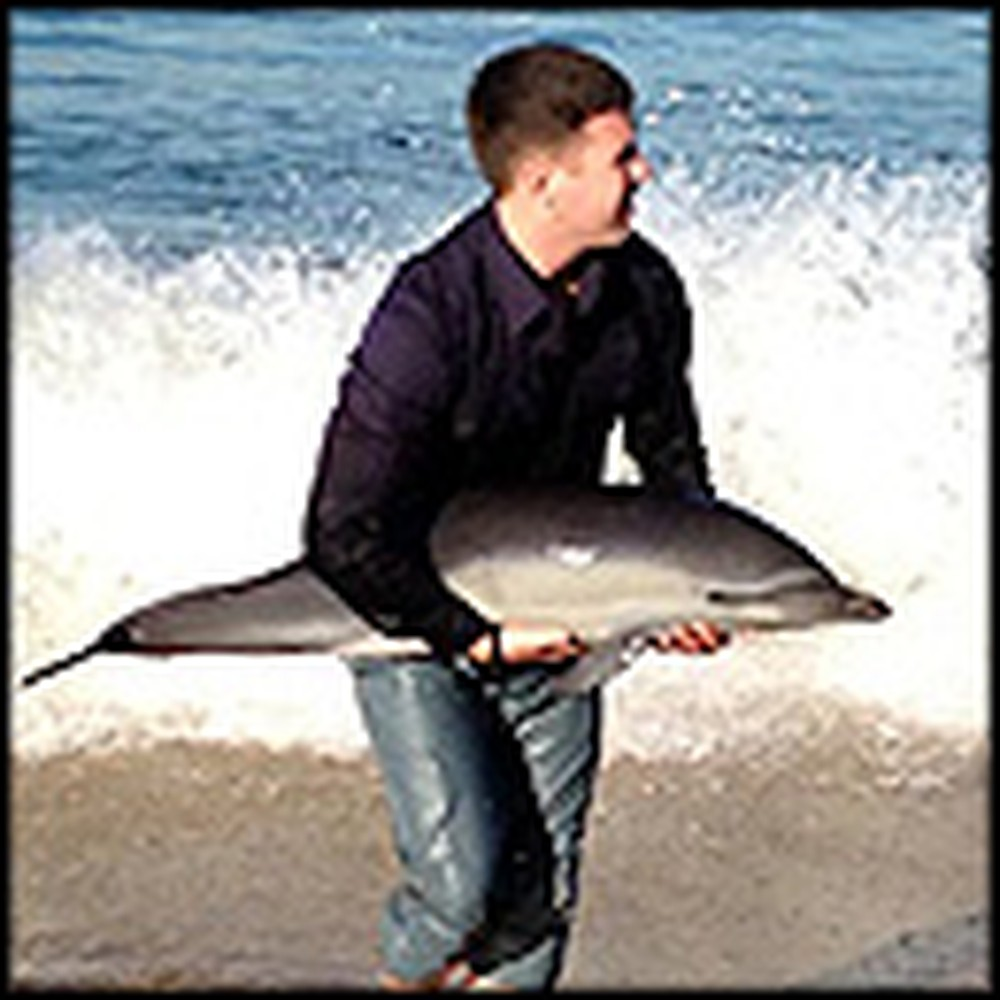 Heartwarming Rescue of a Beached Baby Dolphin