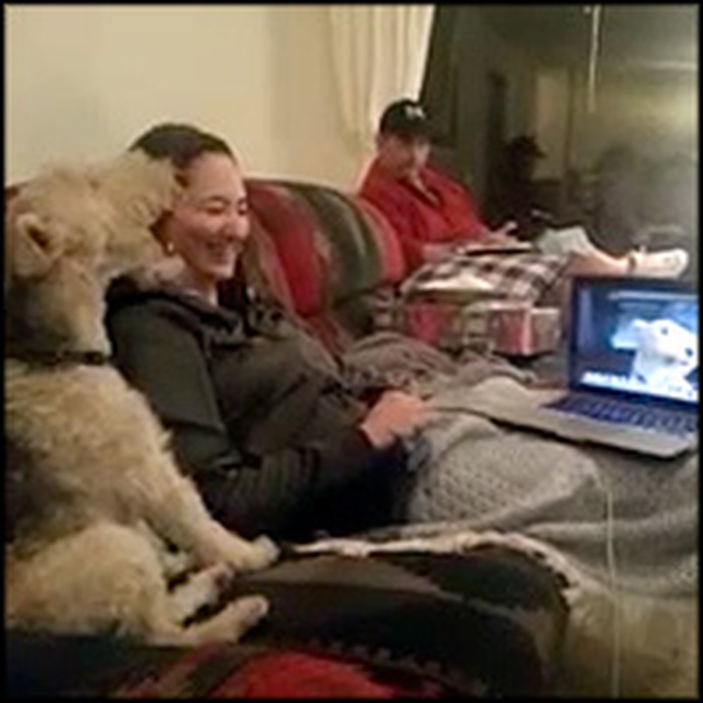 Smart Dog Can Video Chat With his Friend