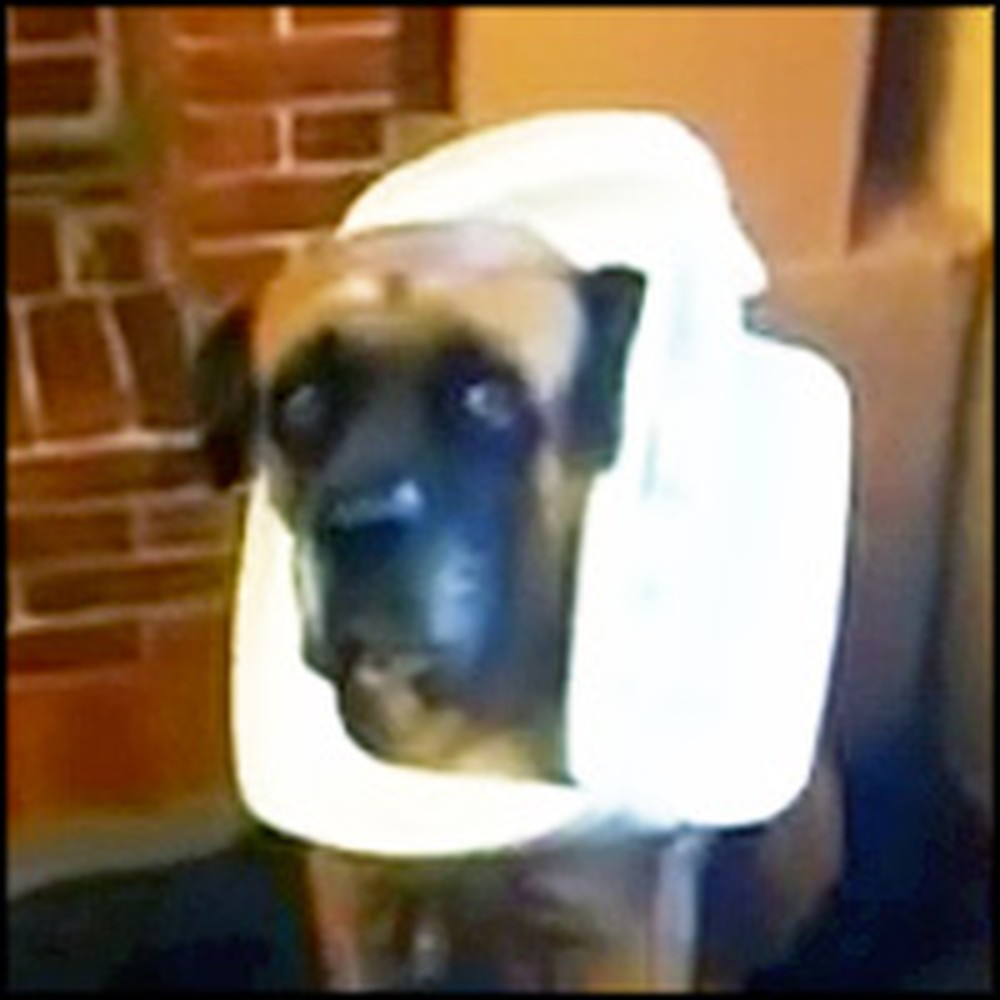 Guilty Dog Gets Caught Digging in the Trash