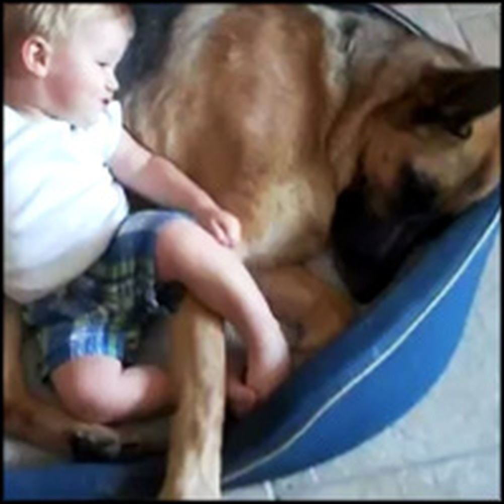 Huge Dog Shares His Bed with a Tiny Baby