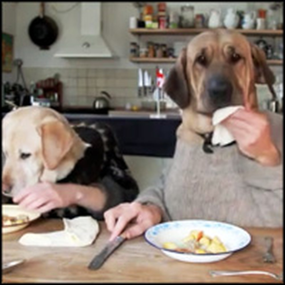 Adorable Canine Couple Have a Romantic Valentine's Day Dinner