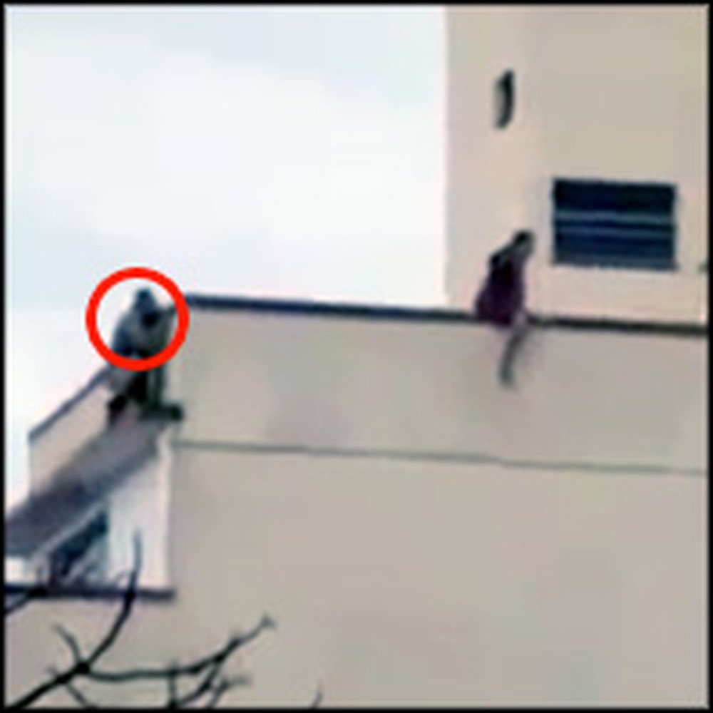 God Sends an Angel to Save a Desperate Woman From Suicide