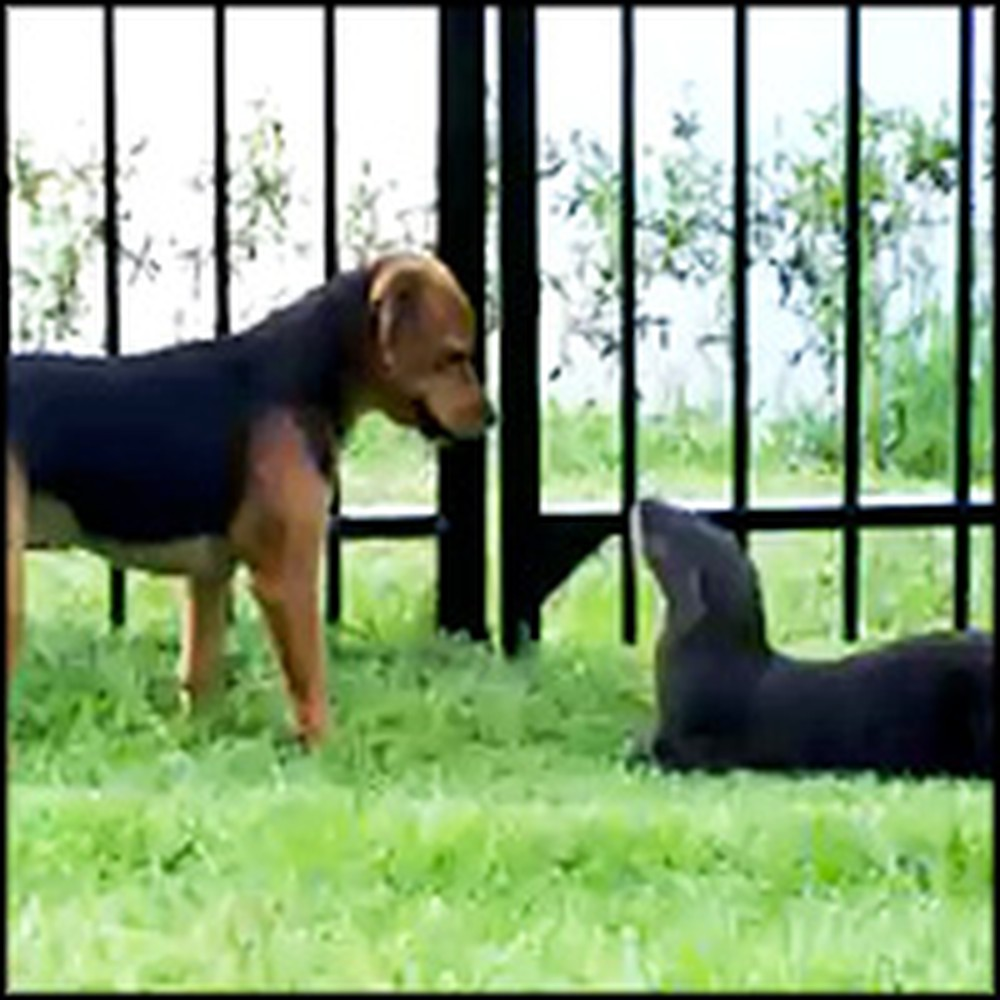 Dog and River Otter Become Unlikely Friends