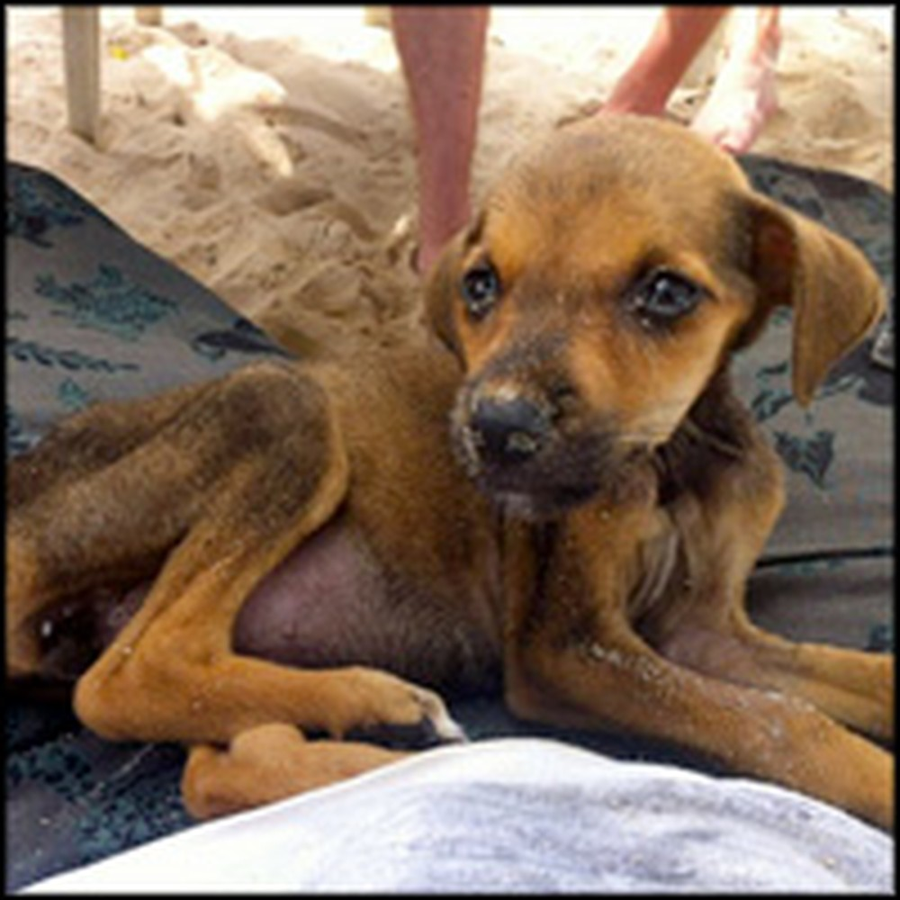 Starving Puppy on a Colombia Beach Gets Heroically Rescued