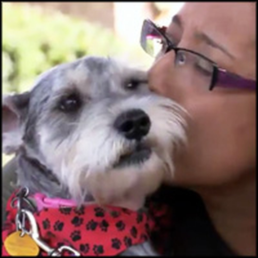 After 2 Years and 700 Miles a Dog is Emotionally Reunited with Her Owner