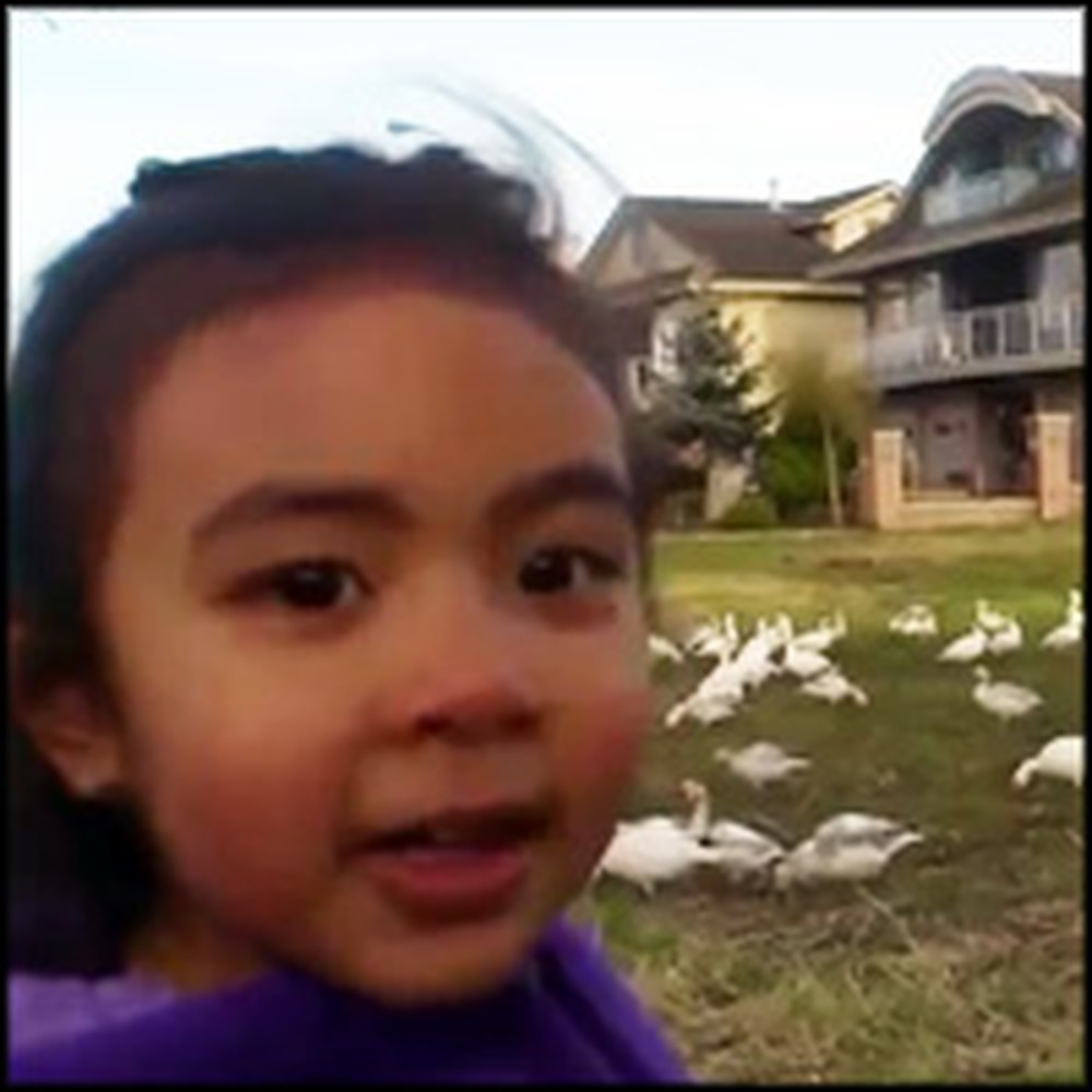 Little Girl Says the Funniest Thing When She Sees a Flock of Geese