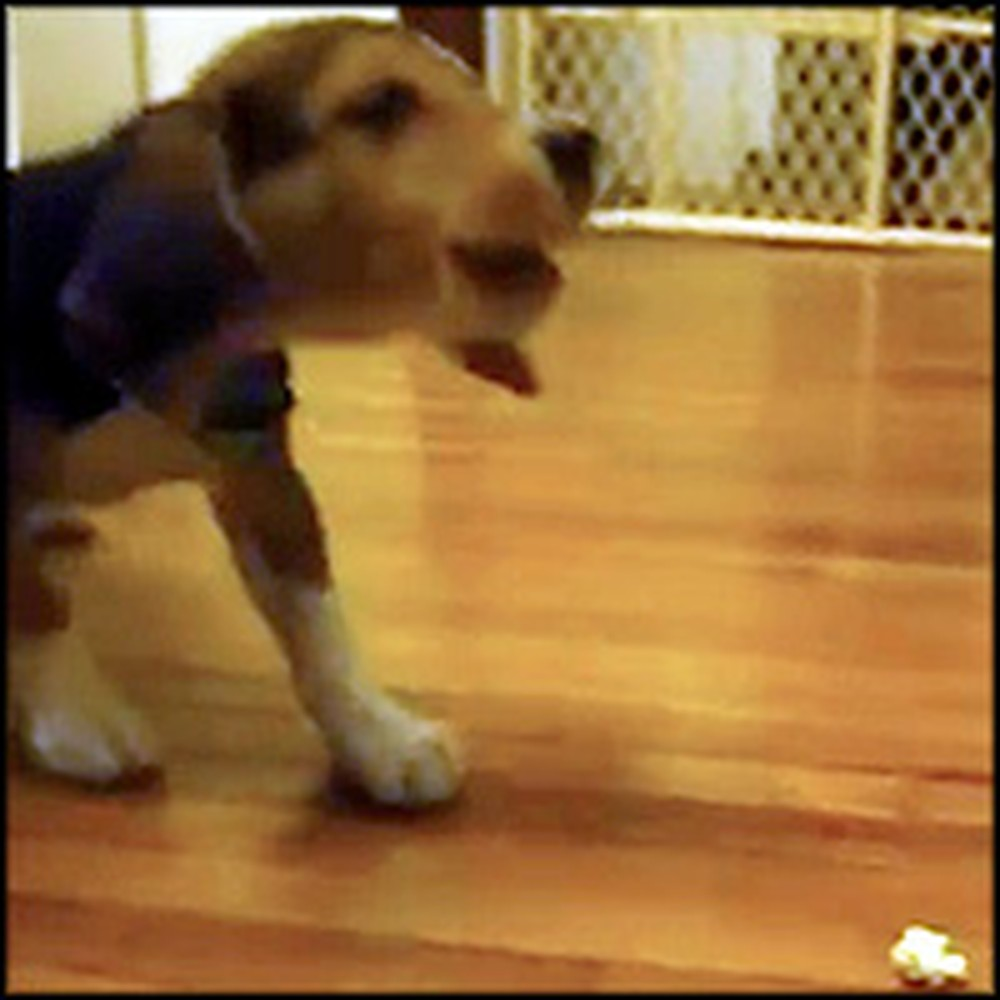 Cute Puppy Doesn't Understand What Popcorn Is