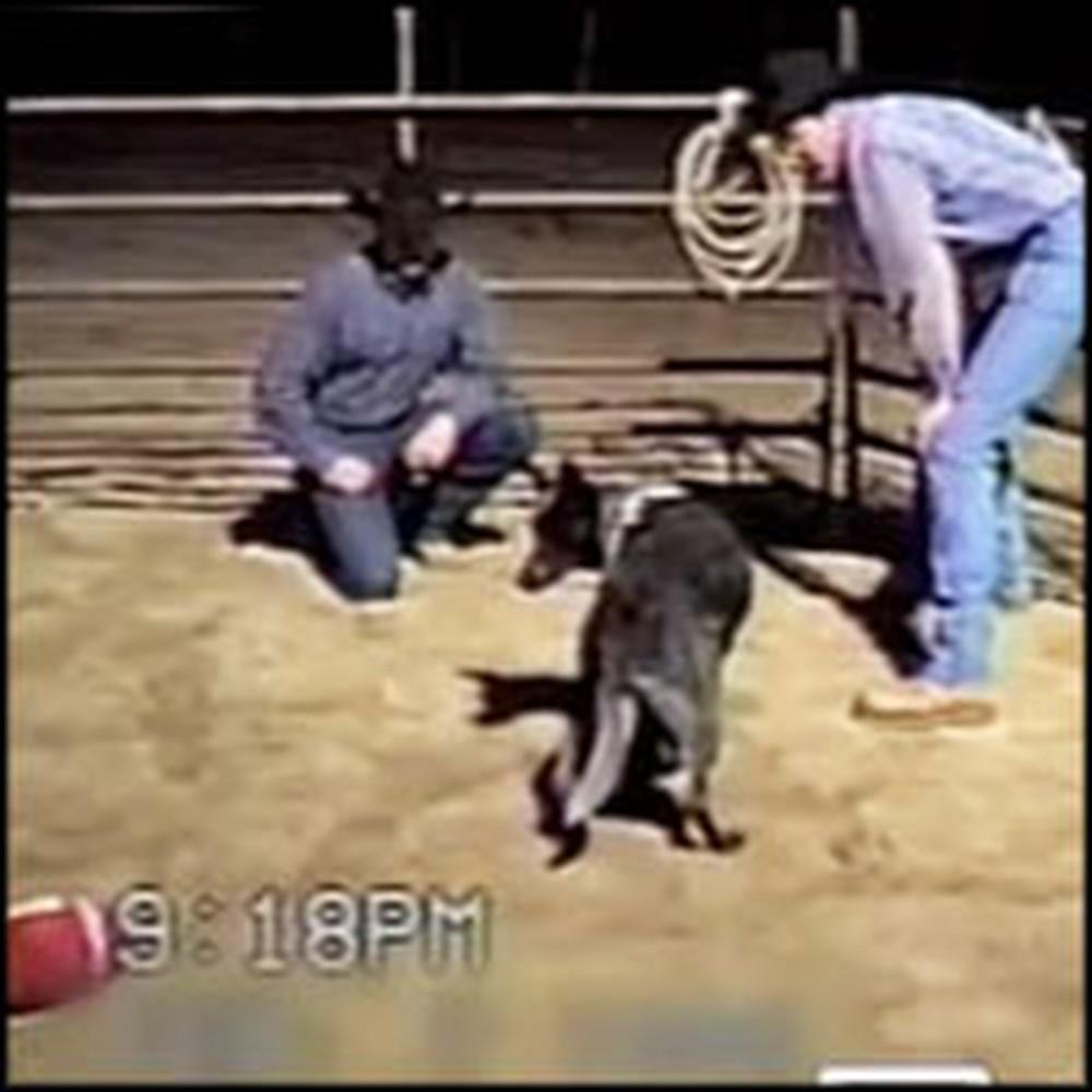 Cowboy's Dog Knows Amazing Voice Commands