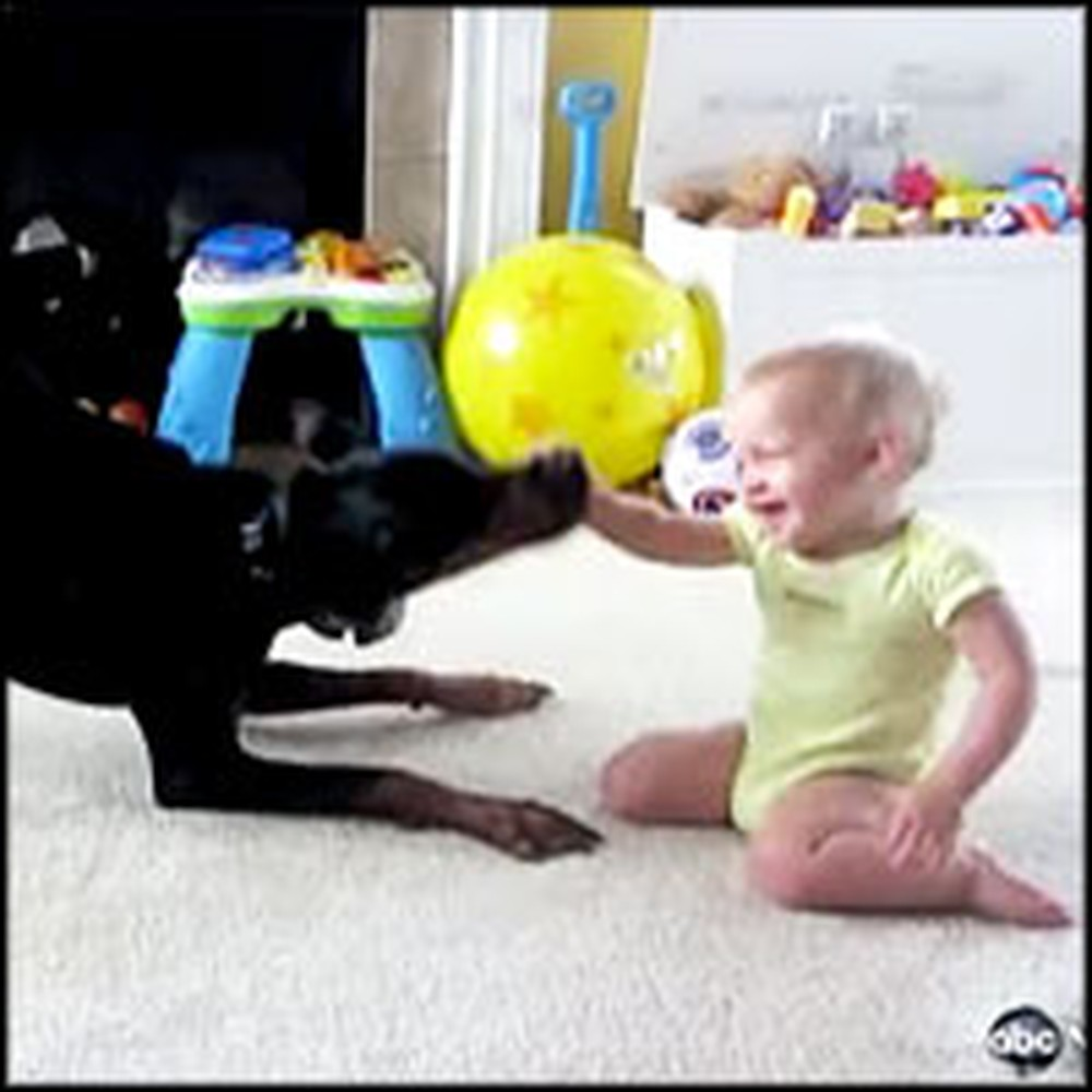 Adorable Baby and Doberman Have a Blast Playing Together