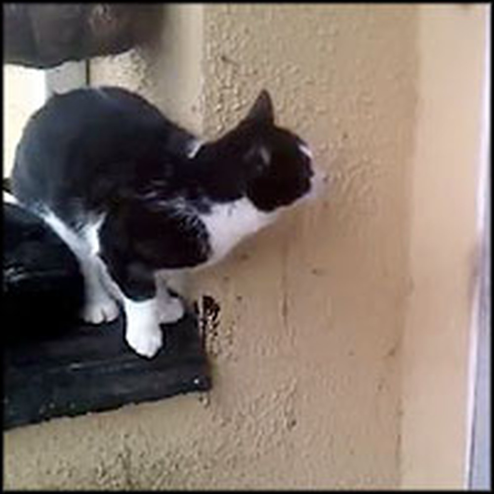 Smart Cat Figures Out How to Let Himself in the House