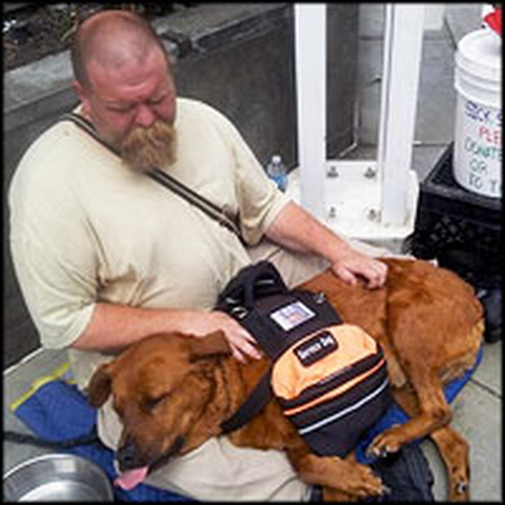 Stranger Acts as a Guardian Angel for a Dying Dog and his Homeless Owner