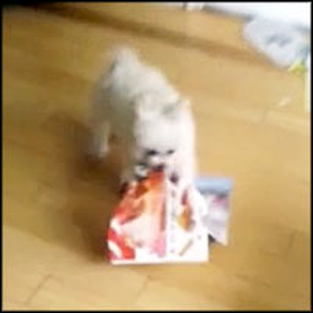 Fluffy Puppy Does Something Hilarious When the Mail Comes