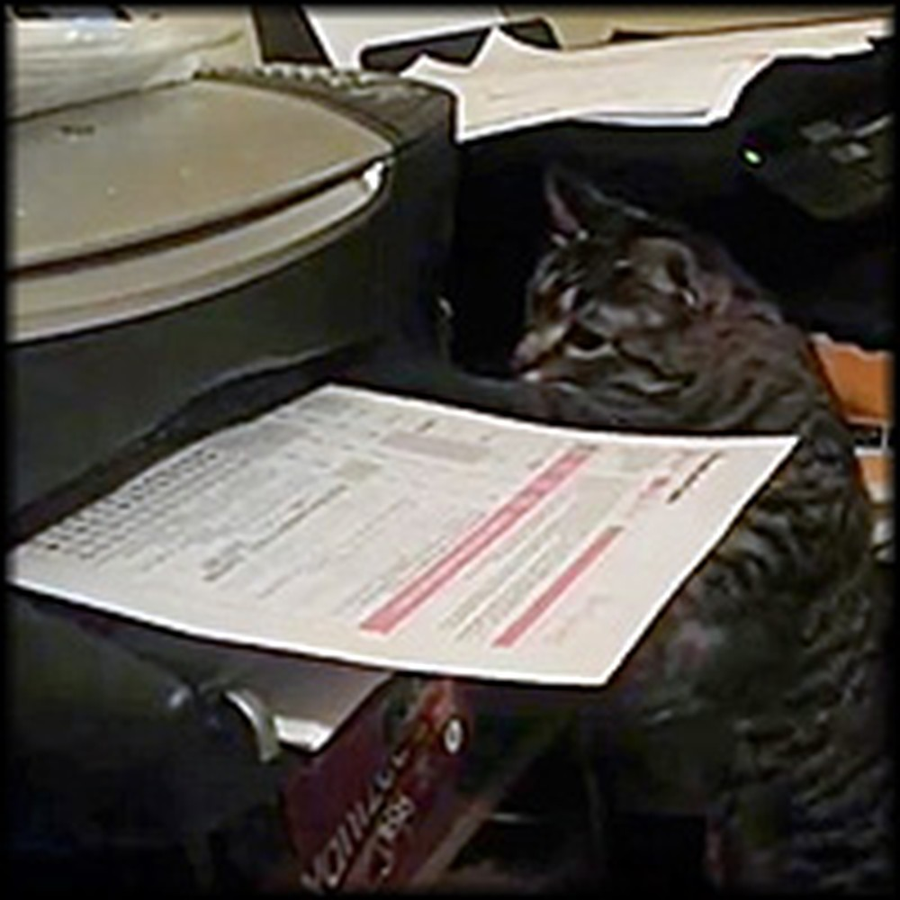 Every Time This Kitty Hears the Printer He Does Something Hilarious