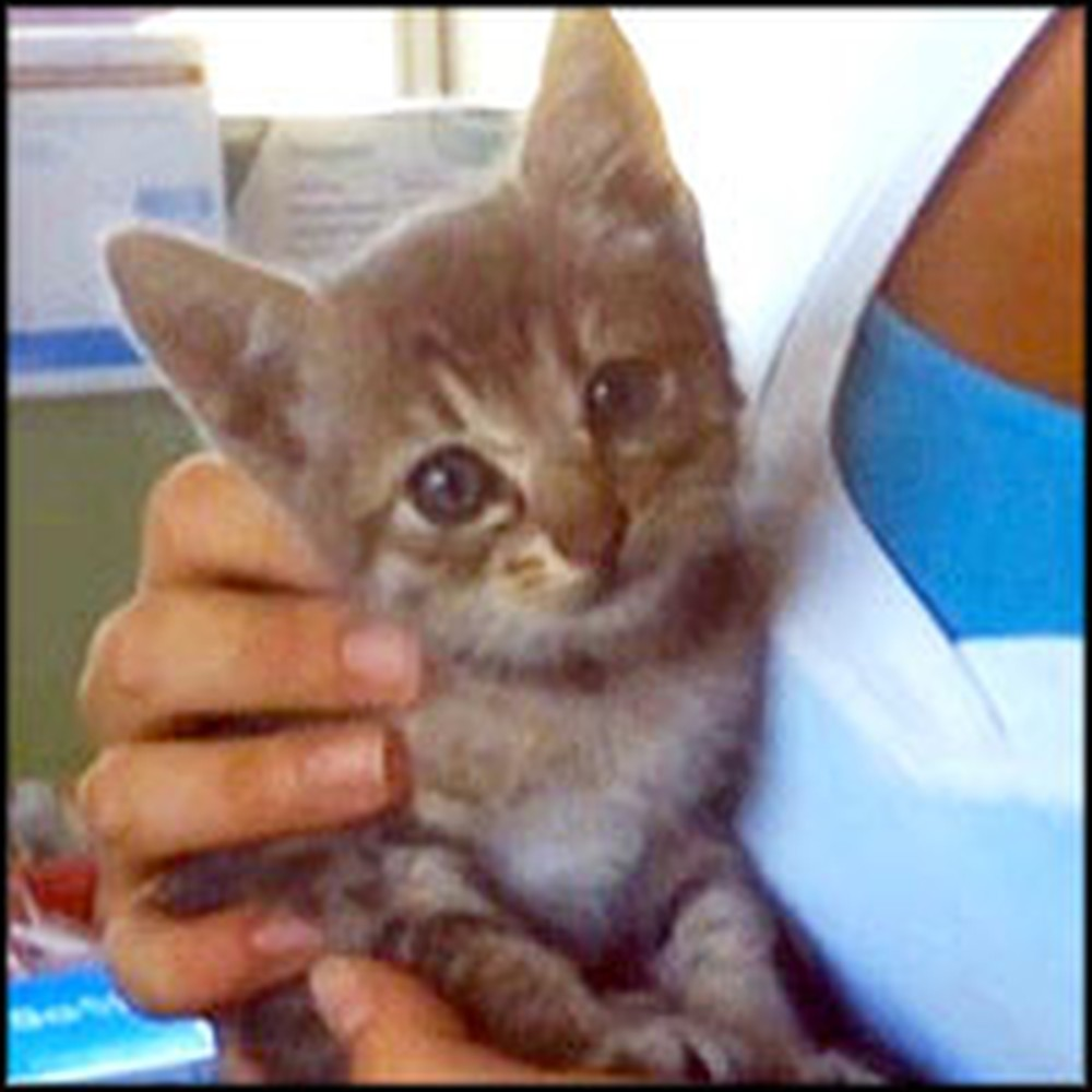Kitten Survives the Unsurvivable... a 1,000 Mile Journey in Car Engine.