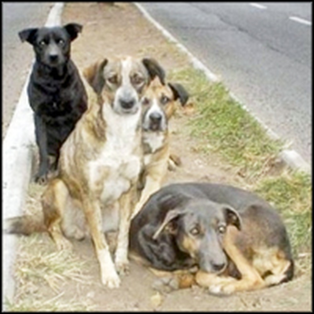 Stray Dogs Save Child From Attempted Rape