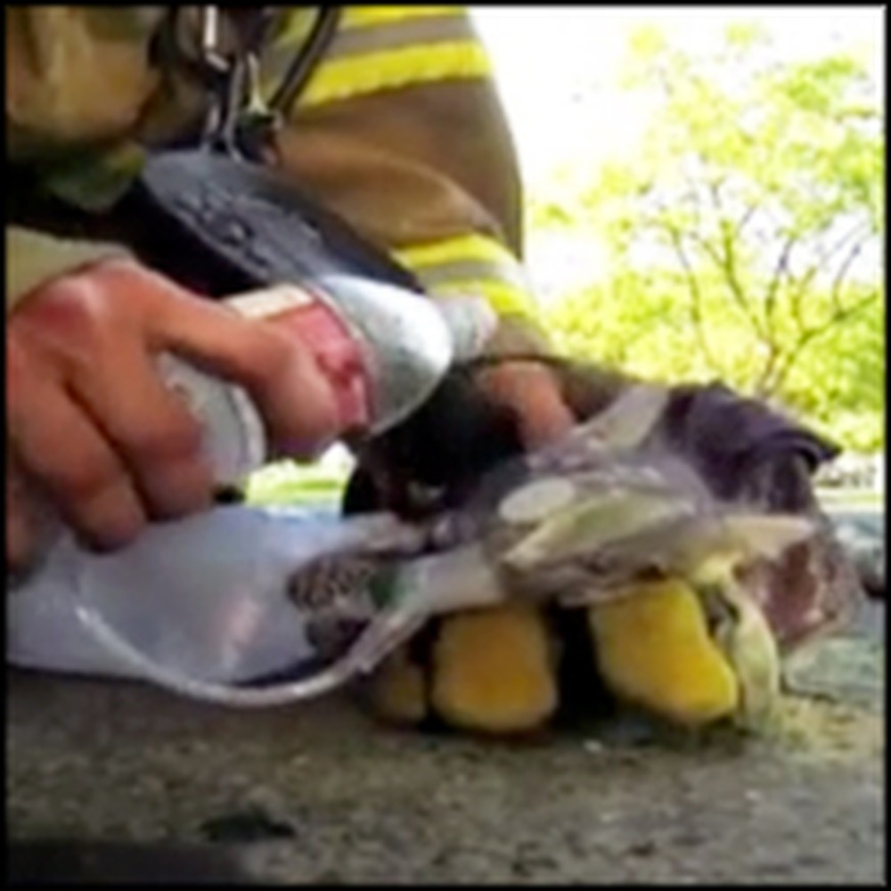 Tiny Kitten Brought Back to Life by a Heroic Firefighter