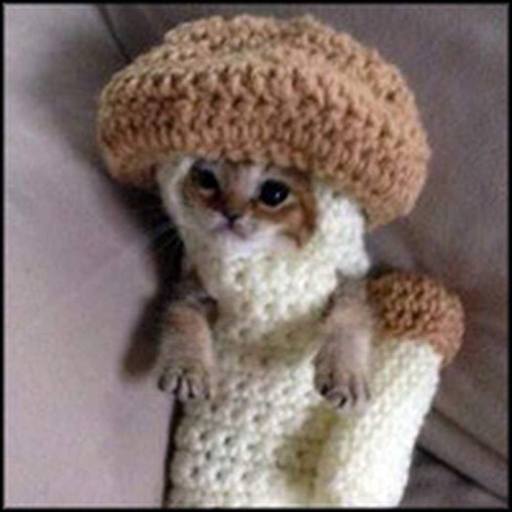 Injured Kitten Rehabilitates in Cutest Way :)