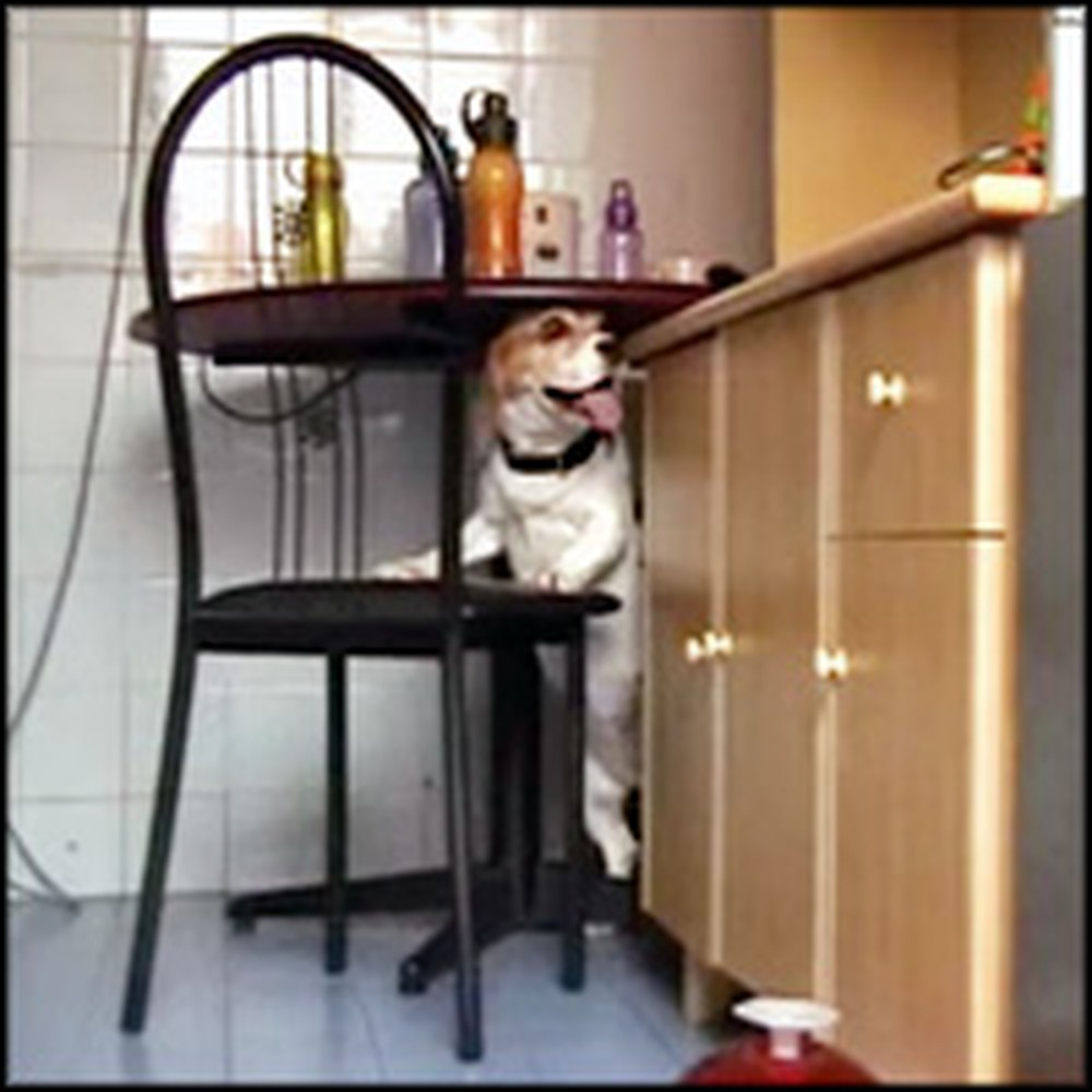 Clever Dog Does Something Genius to Steal Food