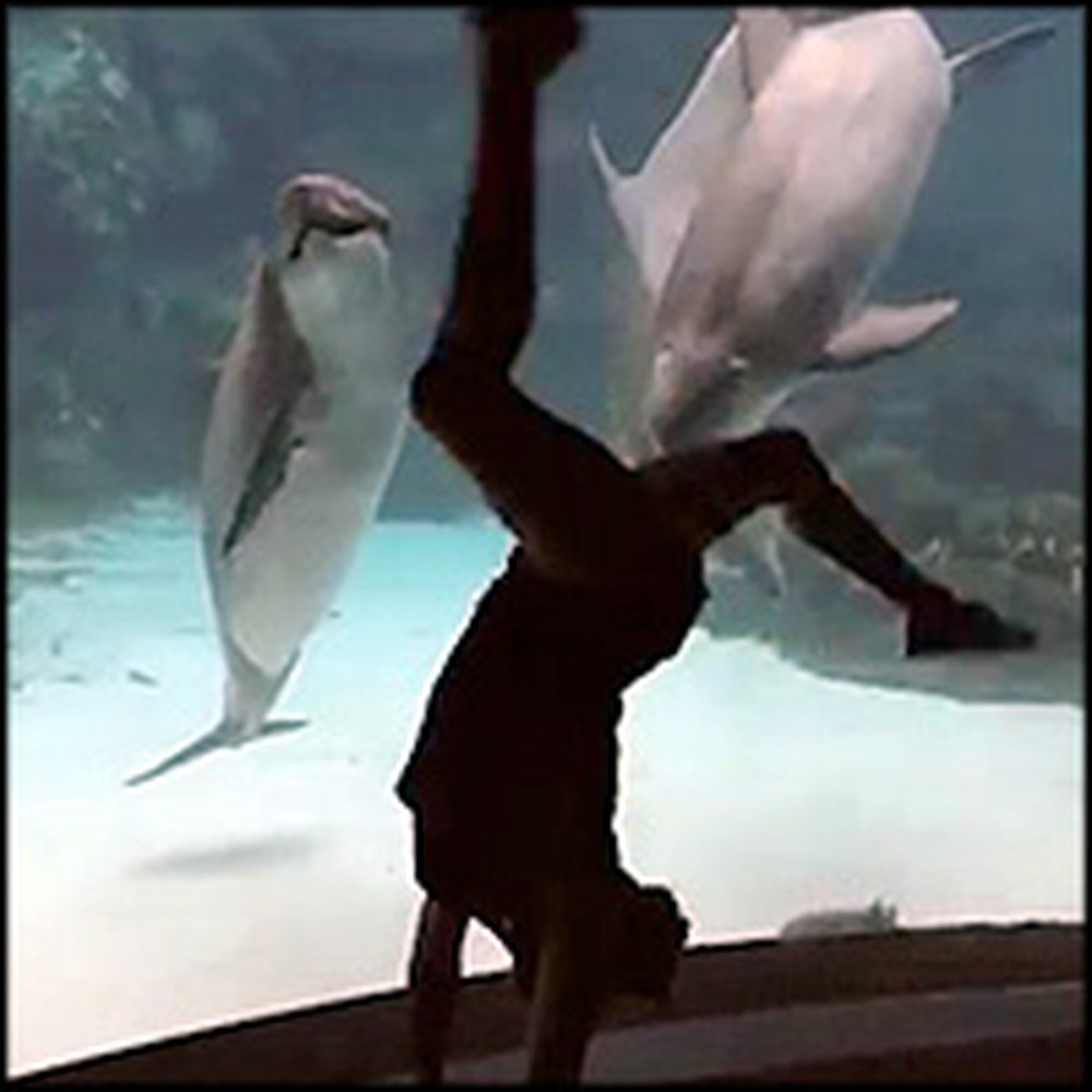 Silly Girl Entertains a Curious Dolphin with Acrobatics