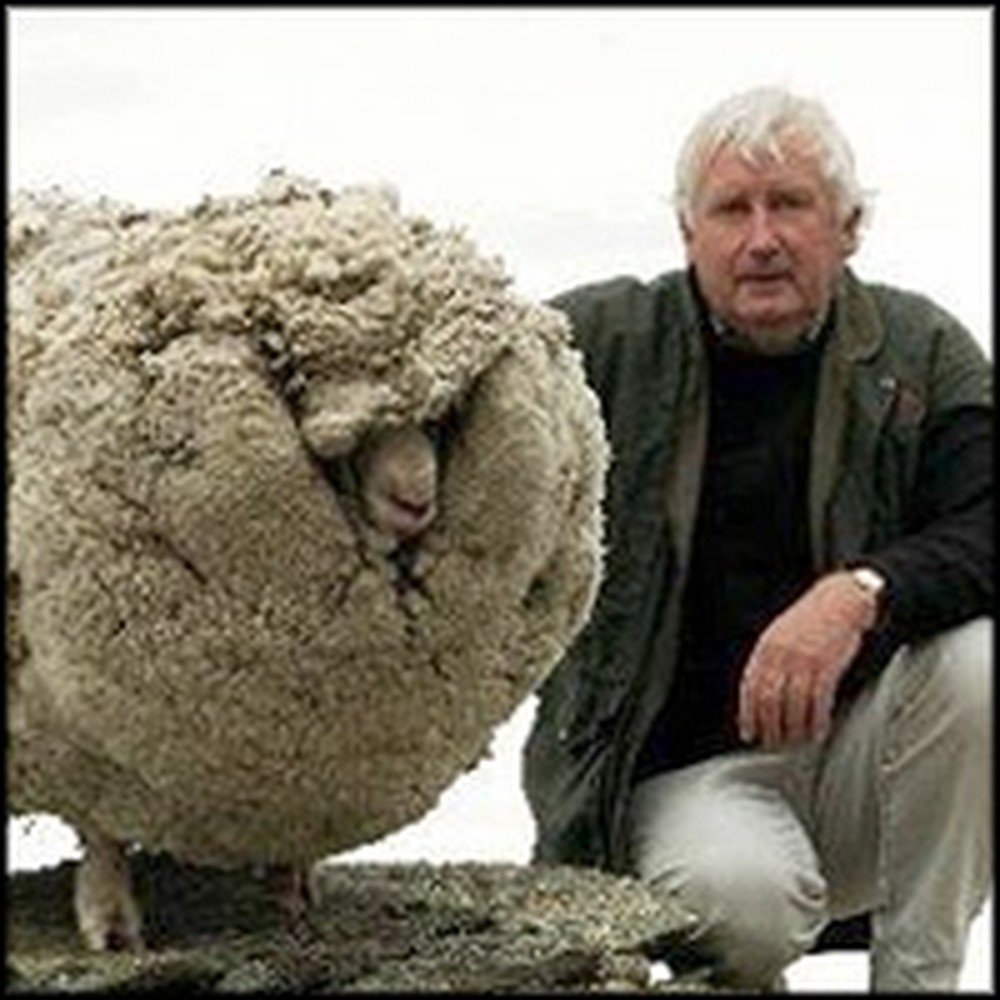 Read This Valuable Christian Lesson to be Learned From a Lost Sheep