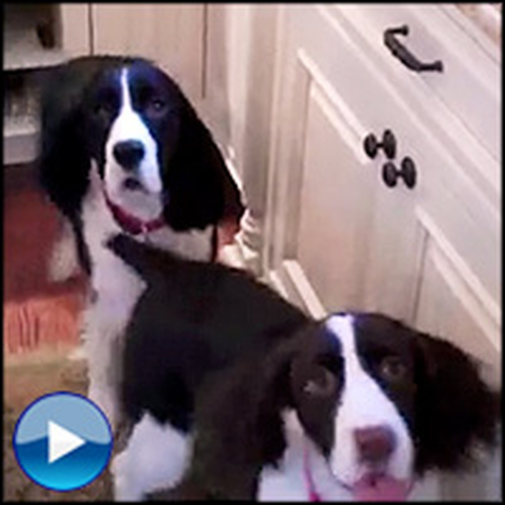 Happy Dogs Celebrate Dinner Time in the Cutest Way