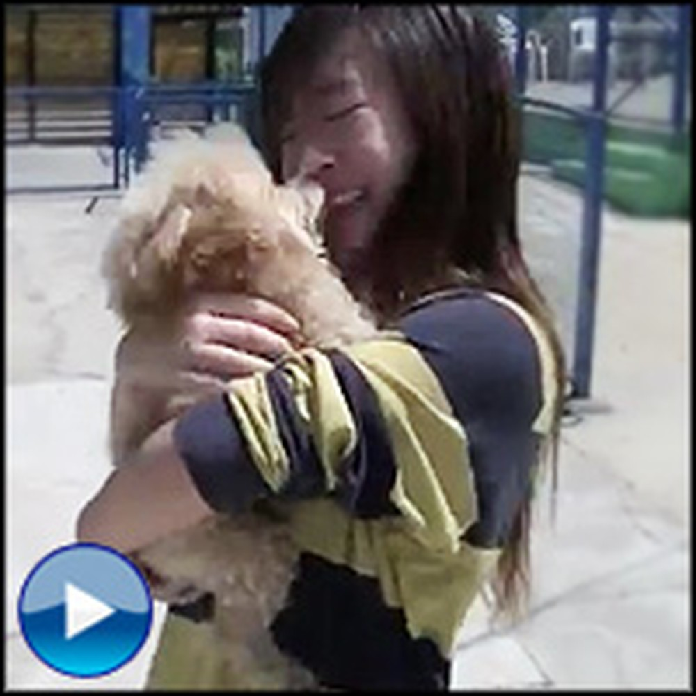 This is The Happiest Dog Reunion You'll Ever See