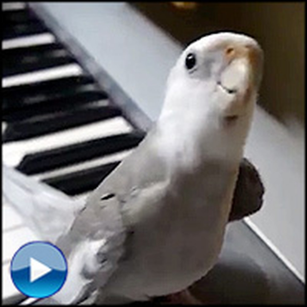 Incredibly Smart Bird Sings a Cute Duet with Owner
