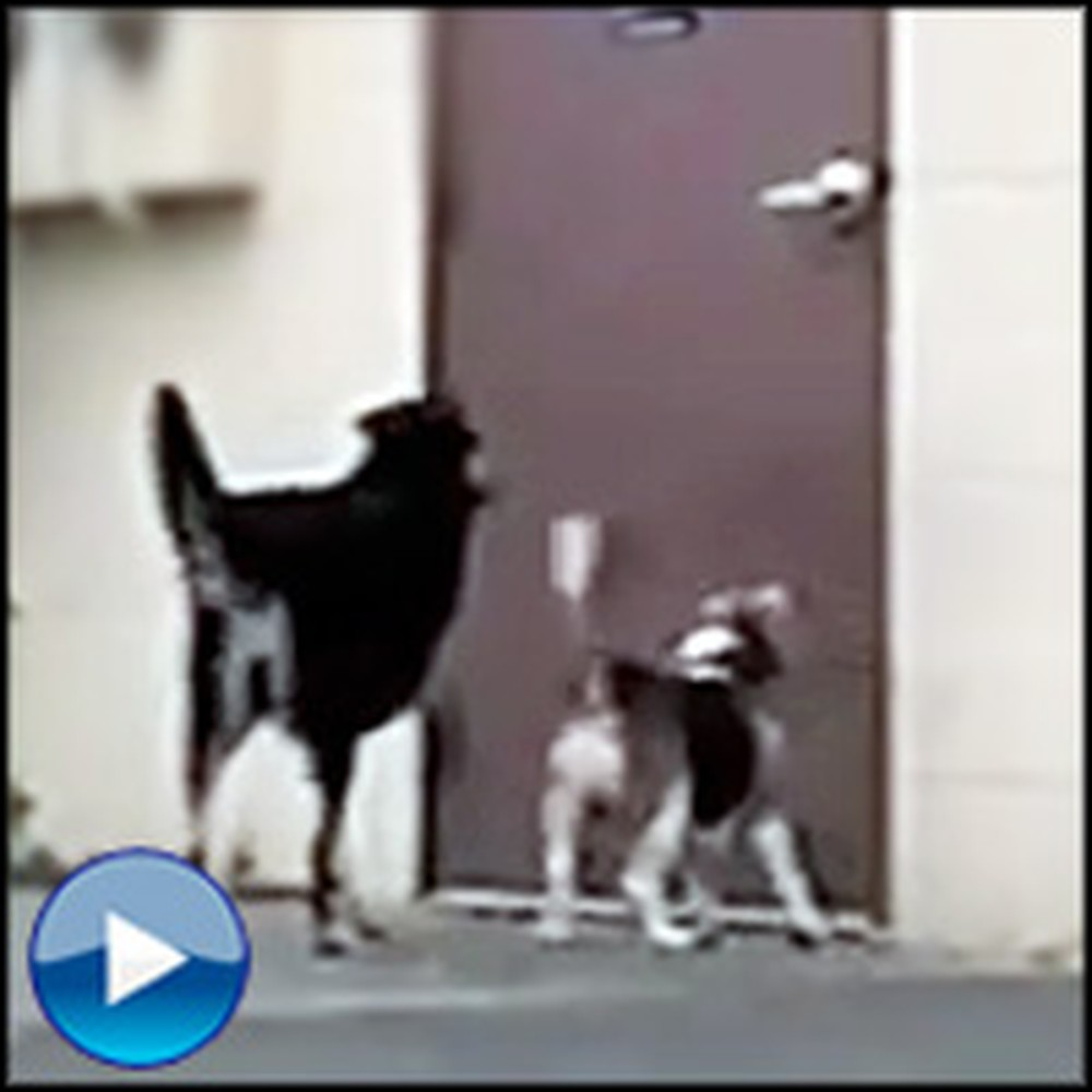 Smart Three Legged Dog Does Something Awesome for His Friend