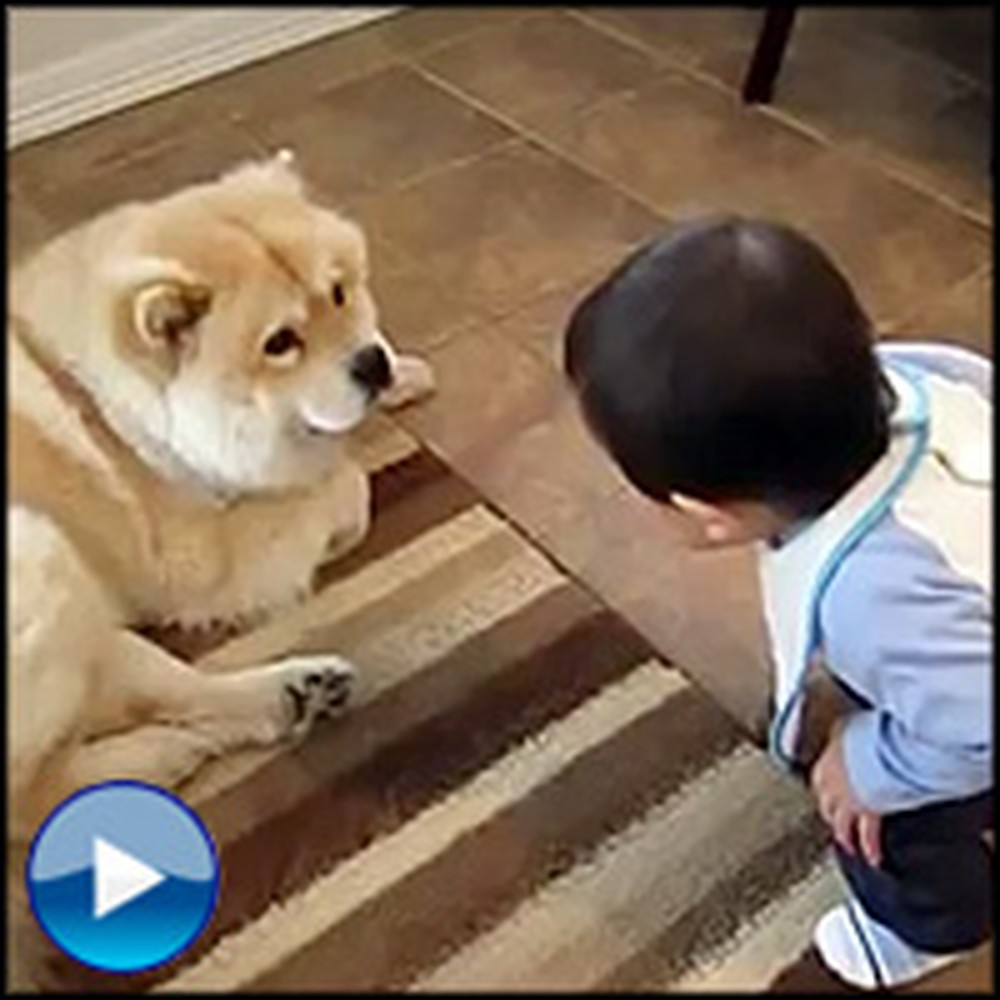 Happy Baby Tries to Talk to the Family Dog - It's the Cutest Thing Ever