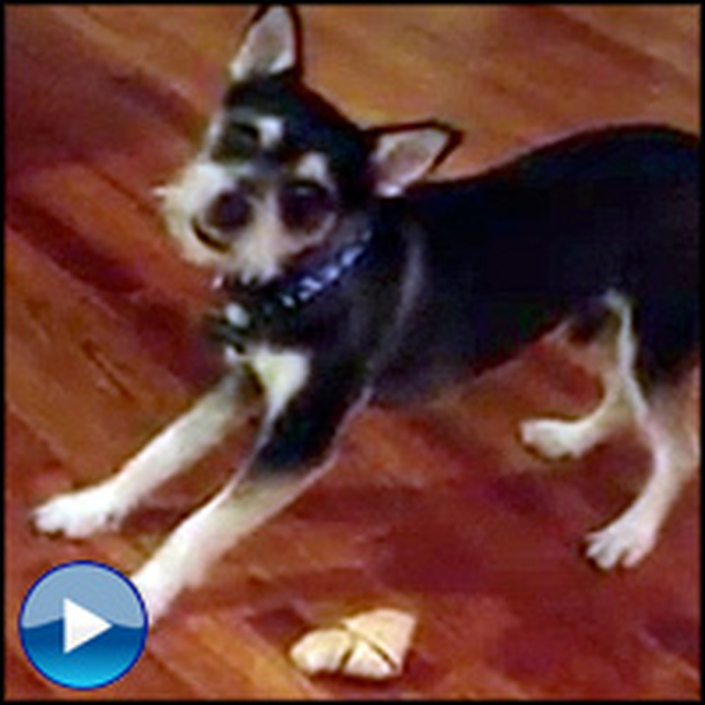 Funny Dog Can't Find His Bone... in Front of His Face