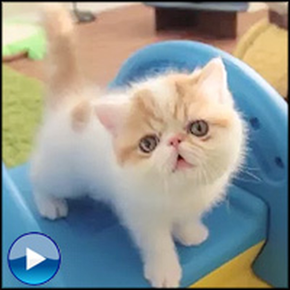 Adorable Roly Poly Kittens Play on an Elephant Slide
