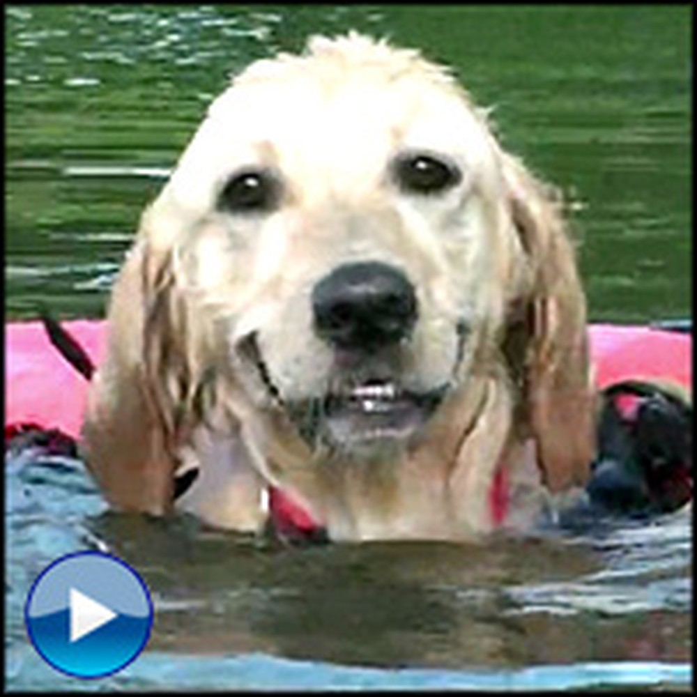 Nothing Can Stop This Disabled Dog From Loving Life - Just Watch