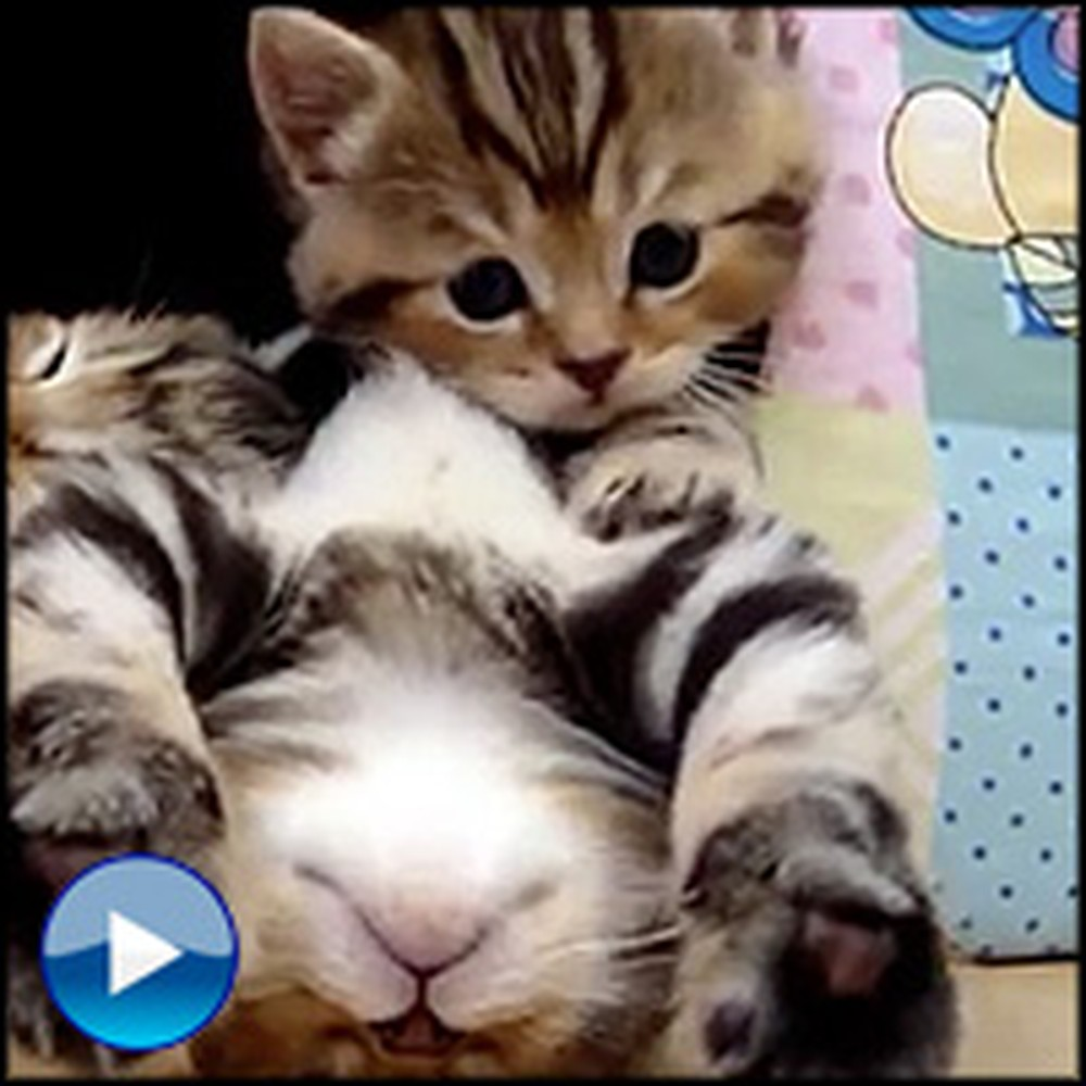 Overly Polite Kitten Doesn't Want to Disturb Her Siblings... So She Does This