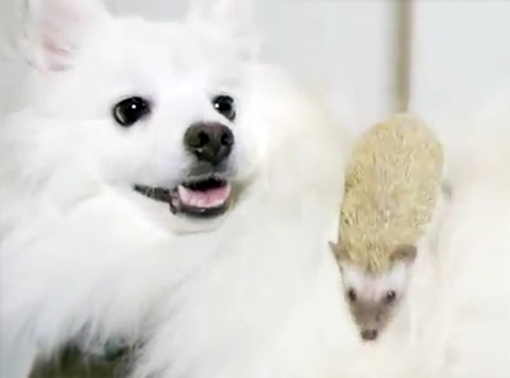 What Happens When This Dog Meets a Hedgehog is So Cute