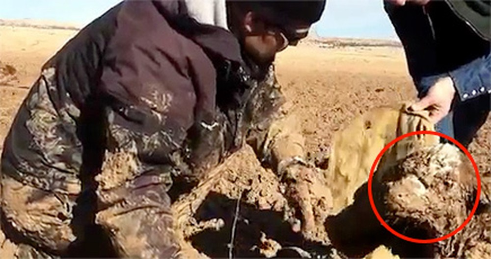 An Orphaned Calf Stuck in Mud Was Dying - Until These Guys Showed Up!