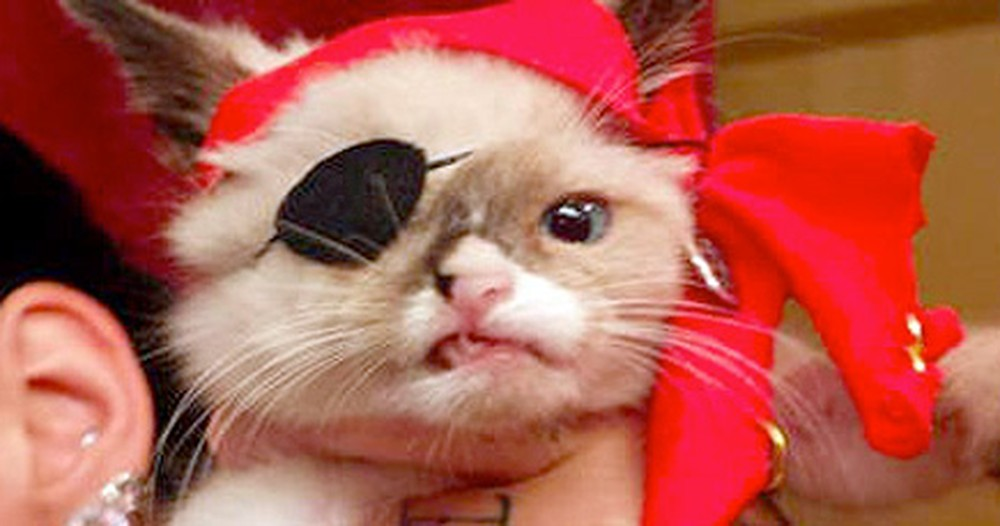Fall in Love With This One-Eyed Pirate Kitten - He's Helping Other Kitties Find Homes