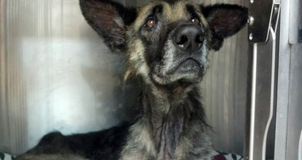 What One Man Did to This Dog is Sickening - But Then Angels Saved His Life :)