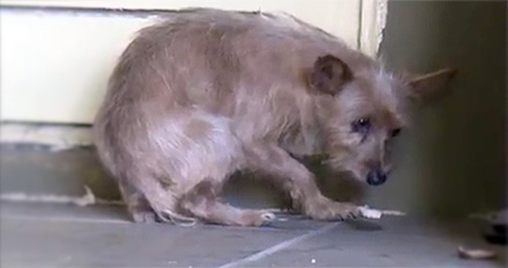 Heartbreaking and Terrified Stray Dog Gets the Happiest Ending Ever