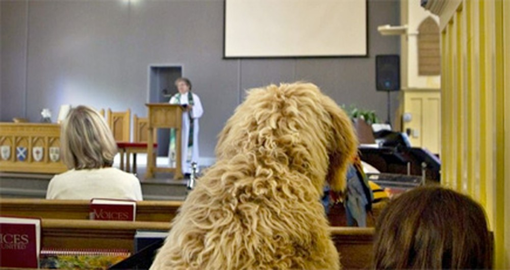 Special Church Services Welcome Pets - Making Sunday Afternoons Adorable
