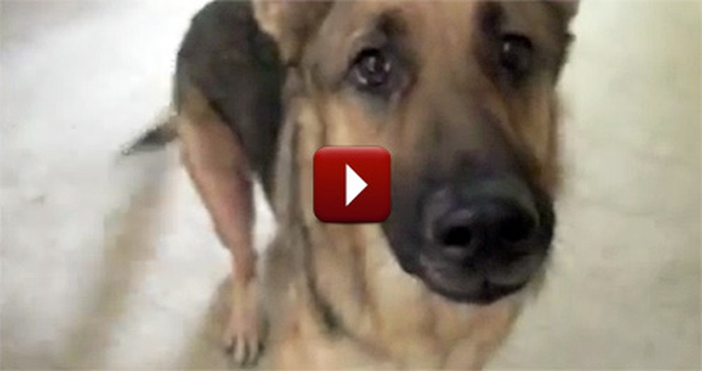 This Funny Talking Dog Got Pranked... and It's Going to Make You Laugh