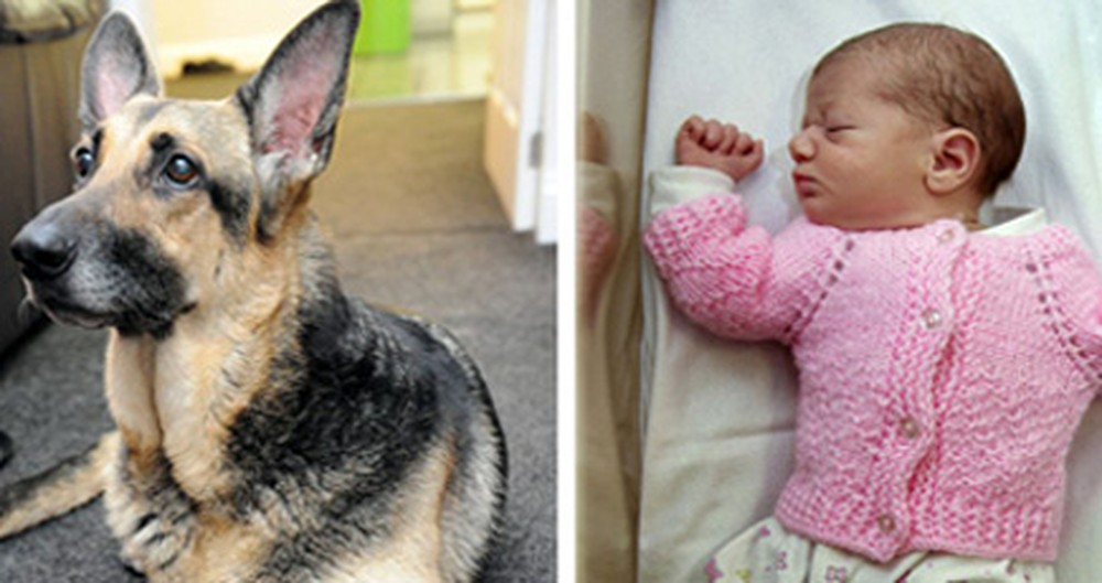 A Newborn Was Abandoned in a Park. Then a Furry Angel Saved Her.
