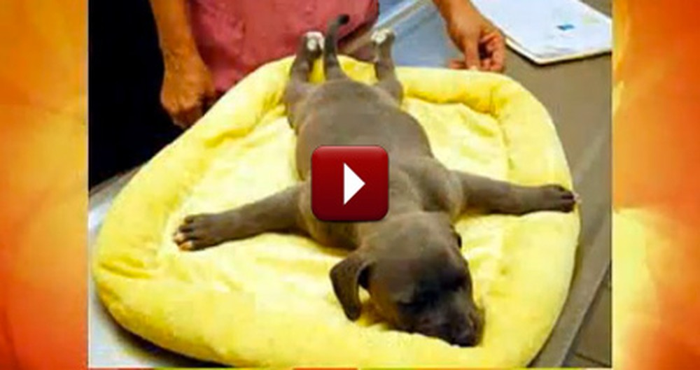 Paralyzed Puppy Thrown in a Trash Can Gets Rescued