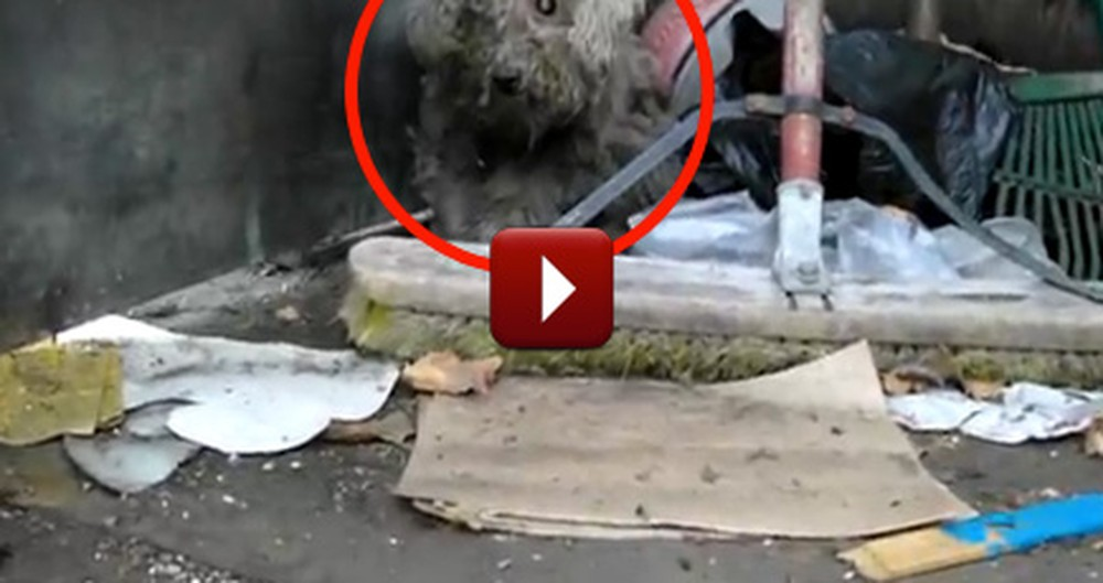 Blind Dog Living in a Trash Pile Gets Rescued