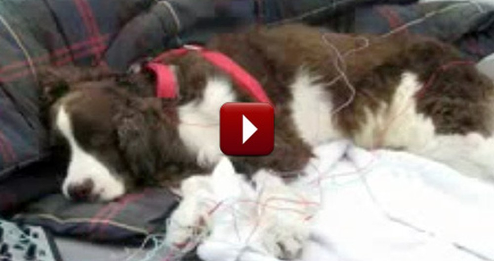 Dog Barely Able to Move Learns to Run - The End Will Make You Cry