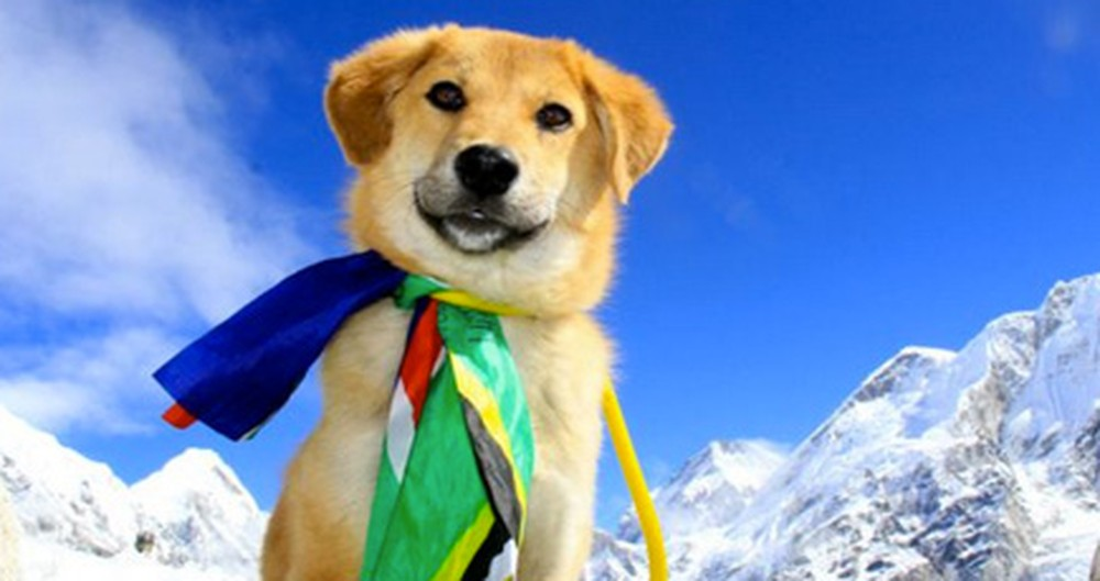Rescued Pup Climbs Mount Everest in Hopes of Finding Homes for Abandoned Dogs