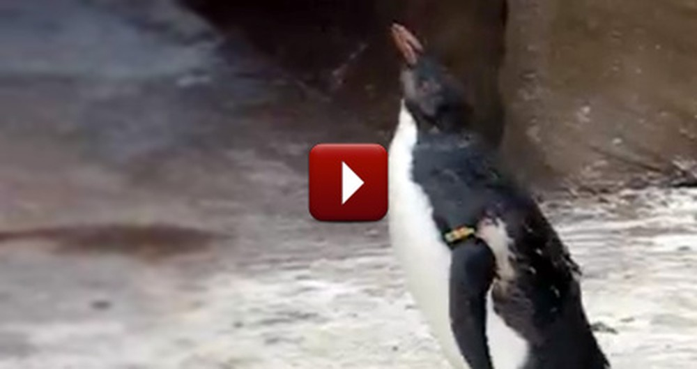 A Little Penguin Spots a Butterfly - Then the Cutest Thing Happened